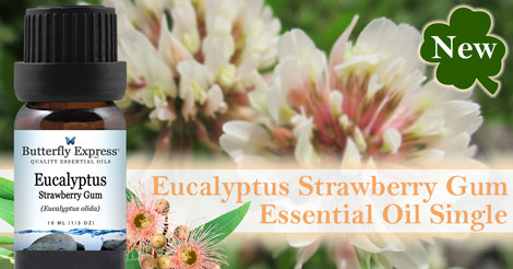 New Eucalyptus Strawberry Gum Essential Oil