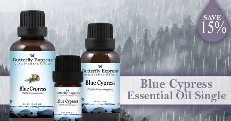 Save 15% on Blue Cypress