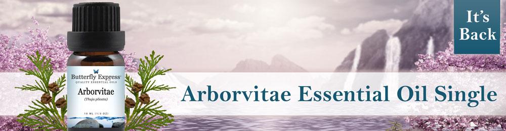Arborvitae Essential Oil Single