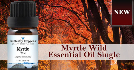 New Myrtle Wild Essential Oil