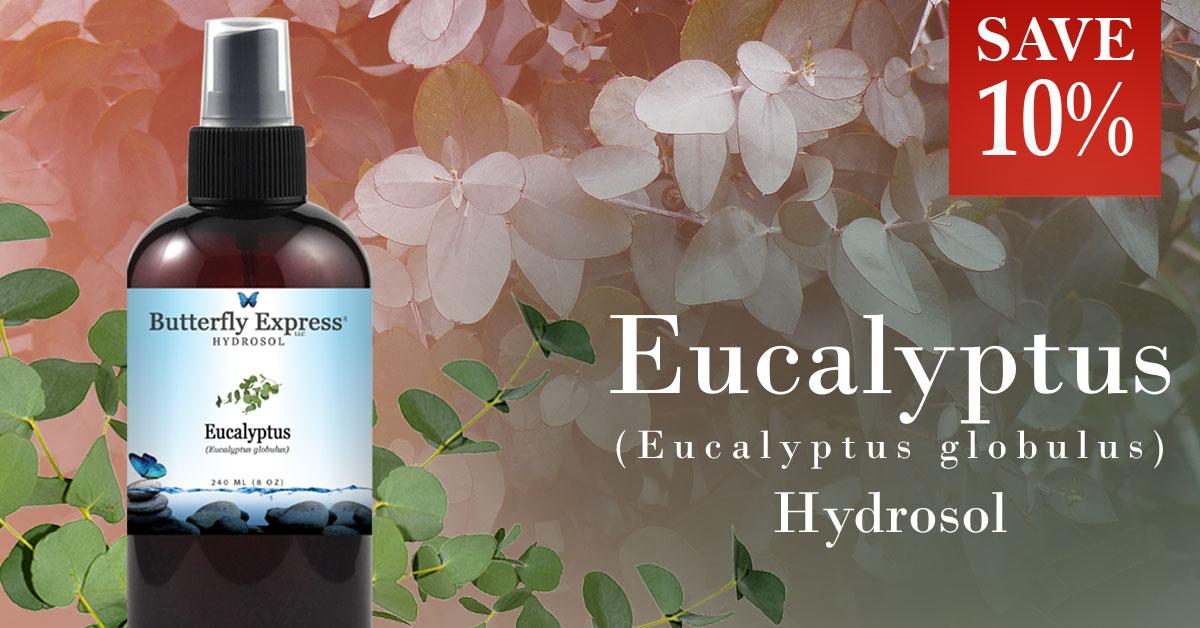 Eucalyptus Globulus Hydrosol